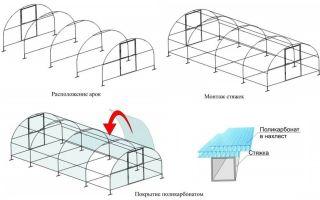 Парник из поликарбоната своими руками: принципы конструкции