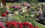 Ароматные уголки в вашем саду
