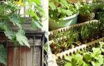 Что вырастить на балконе: интерьерно-огородный ликбез