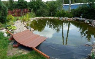 5 шагов к самостоятельному созданию живописного пруда в саду